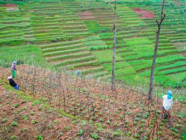 Rwanda_2013-12 (Large)